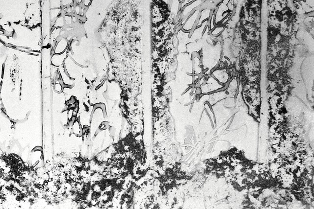 Espalier No.1-5, 2015 Sintered laser marking on Jingdezhen porcelain tile. 51.5 x 72 cm